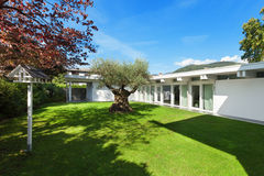 Garden of a modern house with olive tree Stock Photos