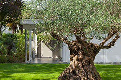 Garden of a modern house with olive tree Stock Photo