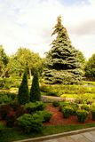 Garden of the Moscow Kremlin. Plants in a garden of the Moscow Kremlin Stock Photos