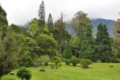 A garden with mountainous background Stock Images