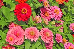 Garden with multicolored gorgeous Stock Image