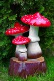 Garden mushrooms Royalty Free Stock Photos