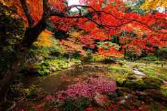 Garden in Nanzen-ji temple at fall, Kyoto. Red maple and Autumn garden at Nanzen-ji Temple, Kyoto, Japan. The most beautiful season to visit Nanzen-ji temple is Royalty Free Stock Image