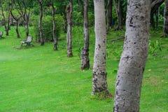 Garden. Nature Park into a beautiful green background Stock Photos