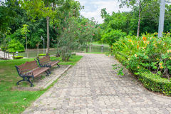 Garden. Nature Park into a beautiful green background Stock Photography