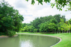 Garden. Nature Park into a beautiful green background Stock Image
