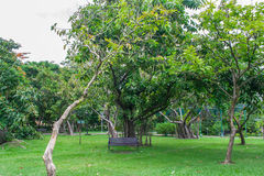 Garden. Nature Park into a beautiful green background Royalty Free Stock Images