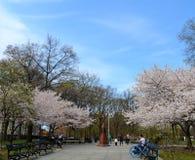 Garden near the Brooklyn Botanic Garden, NYC Stock Photo