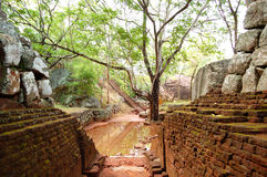 The garden near Sigiriya (Lion's rock) Stock Image