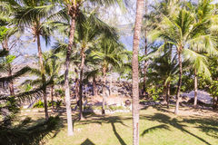 Garden next to beach. With coconut trees and others Royalty Free Stock Photos