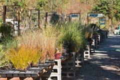 Garden Nursery Plants Royalty Free Stock Photography