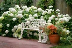 Garden Oasis. White flower heads of the Annabell Hydrangeas surround a garden bench, creating a garden oasis Royalty Free Stock Photo