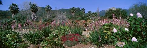Garden, Ojai, California Royalty Free Stock Image