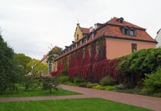Garden in Oliwa. And one of the buildings of the abbey with vine on it Stock Image