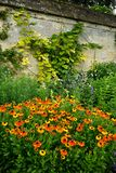 Garden: orange helenium flowers Stock Images