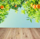 Orange tree garden stock photos