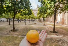 Garden with orange trees inside 16th century Sevilla Cathedral, Spain royalty free stock photography