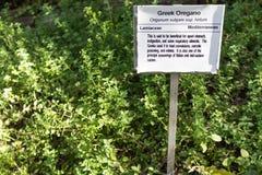 Greek Garden Oregano stock photography