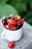 Garden organic berries Royalty Free Stock Photo