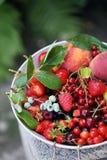 Garden organic berries Royalty Free Stock Image