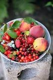 Garden organic berries Stock Images