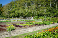 Garden on an organic farm. Organic garden on a farm on a sunny summer day Stock Photos