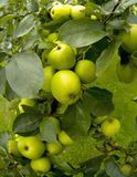 Garden organic ryton ryton gardens warwickshire midlands england Royalty Free Stock Images