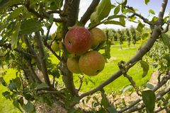 Garden organic ryton ryton gardens warwickshire midlands england Royalty Free Stock Photography