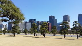Garden outside Imperial Palace - Tokyo Royalty Free Stock Photography