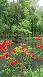 Garden, overlooking the garden of claude monet france stock photos
