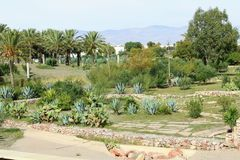Garden with palm trees royalty free stock photos