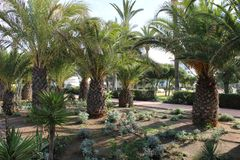 Garden with palm trees royalty free stock photo