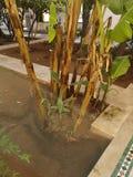 Garden palm trees stock photos