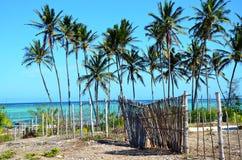 Garden with palm trees, Zanzibar Stock Photo