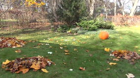 Garden panorama autumn. Panorama of garden yard with rake piles of leaves under colorful autumn tree and pumpkin. People recreate over fence stock video