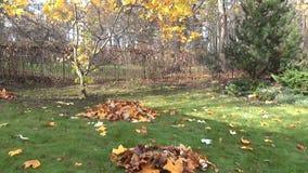 Garden panorama autumn stock video