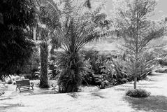 Garden with park bench in Chonburi Thailand. This is a black and white image of a wooden bench set in a garden in Chonburi Thailand Royalty Free Stock Photography
