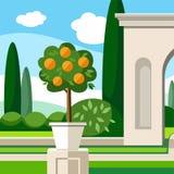 Garden, Park, orange tree, coloured illustrations. In the Park grows an orange tree. Landscape design. Colored illustration Stock Photo