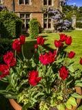 Garden. Parterre garden at stately home royalty free stock photos