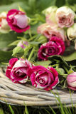 Garden party decor. Bouquet of pink roses Royalty Free Stock Images