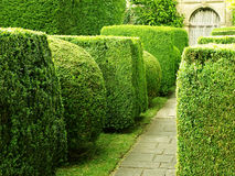 Garden Path. With Topiary Landscaping Royalty Free Stock Image