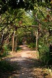 Garden path. Bamboo archways leading down the village garden path Stock Image