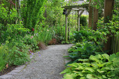 Garden path. Lined with hostas, grasses and other shade loving plants Stock Image