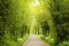 Garden Path. A path leading into a tropical garden Stock Photo