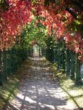Garden path. Beautiful avenue in park in the early autumn Royalty Free Stock Photography