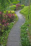 Garden path. Curved path in a tropical garden stock image