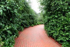 Garden path. Red brick garden path leading through hedges Royalty Free Stock Image