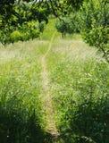 Garden path. In grass during summer Royalty Free Stock Photos