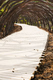 Garden path. Curved path in a peace garden royalty free stock photos