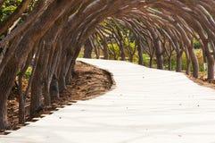 Garden path. Curved path in a peace garden stock photos